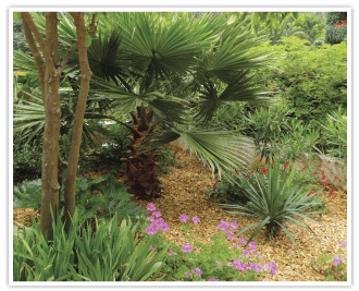 COPEO high quality chestnut mulch for landscape